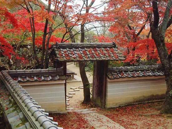 世界美景/日本櫻紅