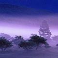 世界美景/紫之浪漫
