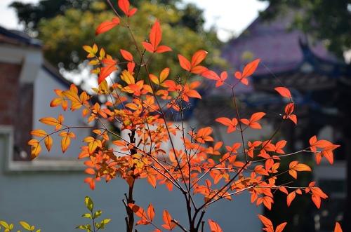 20130120台北圓山花展 034_nEO_IMG.jpg
