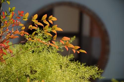 20130120台北圓山花展 041_nEO_IMG.jpg