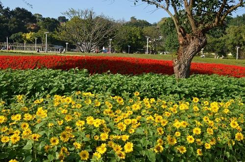 20130120台北圓山花展 061_nEO_IMG.jpg