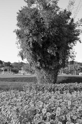 20130120台北圓山花展 071_nEO_IMG.jpg