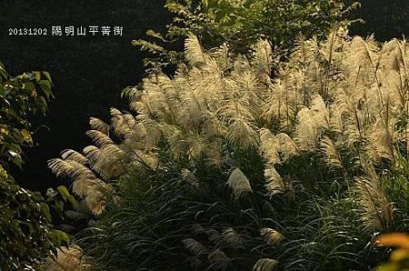 20131202陽明山平菁街 114_nEO_IMG.jpg