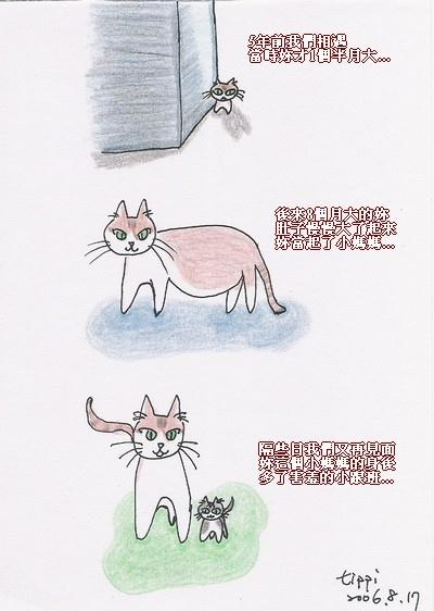 我和1號街貓小姐