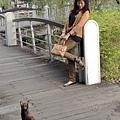 貓咪盯著我 2013.11.3