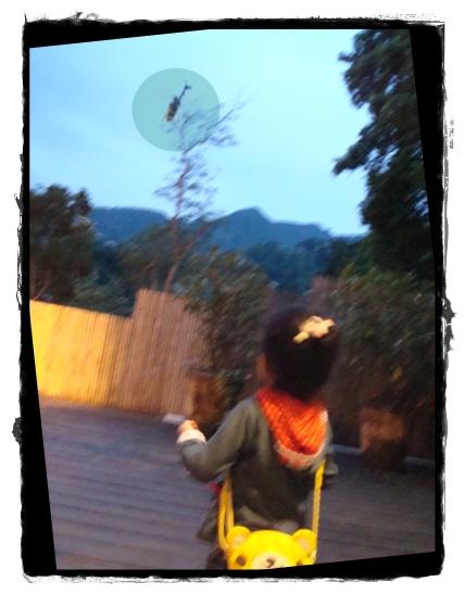 大山背7.JPG