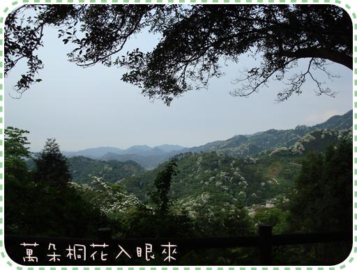 大山背8.JPG