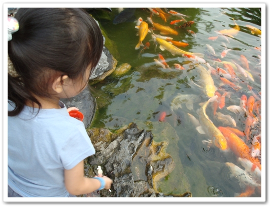 交大餵魚4.JPG