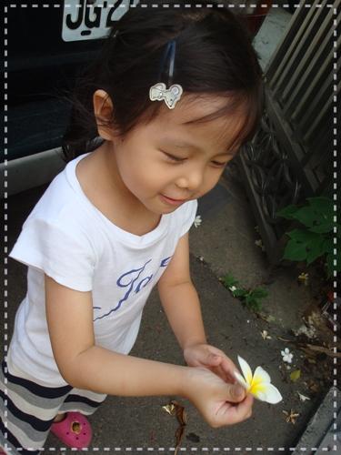 200906雞蛋花.jpg