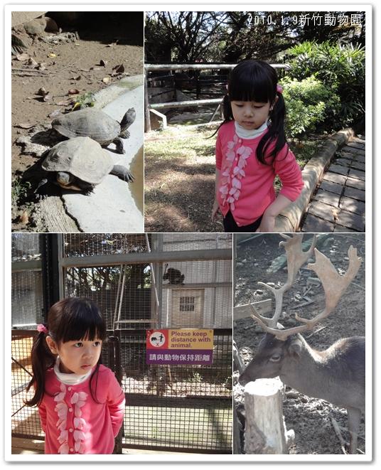 201001動物園02.jpg