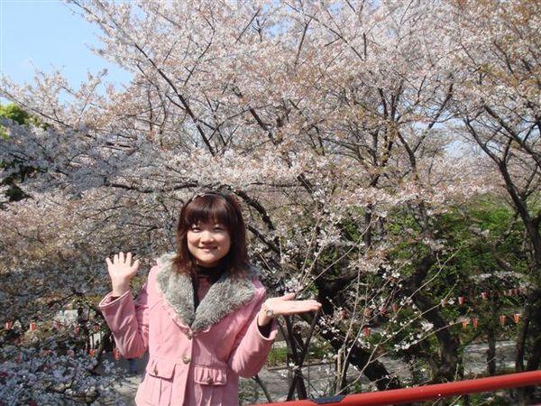 離櫻花近的感覺真好