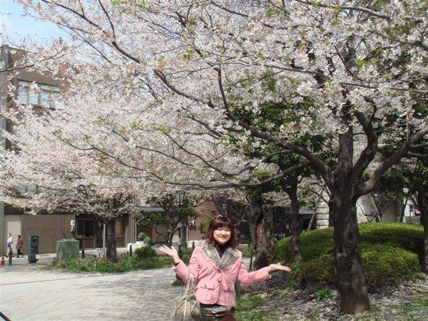 怎麼照都是櫻花