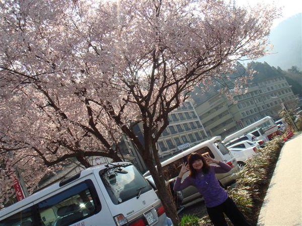 這裡也有櫻花唷