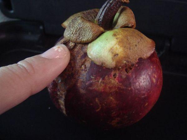 同團人給我的水果