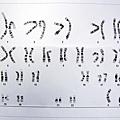23對染色體
