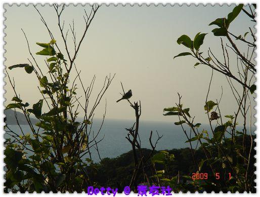 鳥-2.jpg