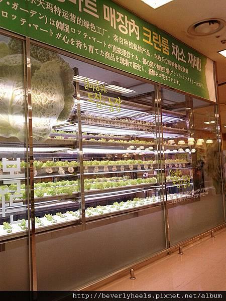 Lotte Mart裡面自己種菜嗎?