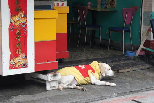 狗狗也會冷2.jpg