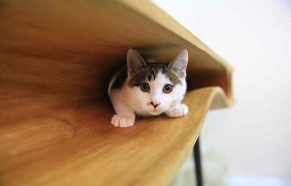 catable_1.jpg