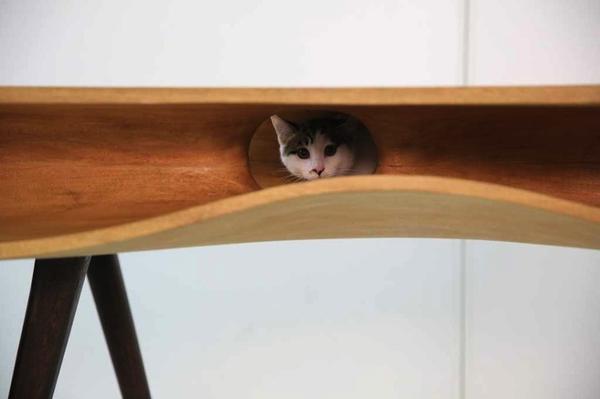 catable_3.jpg