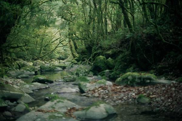再沒見過比這裡具靈氣的溪了