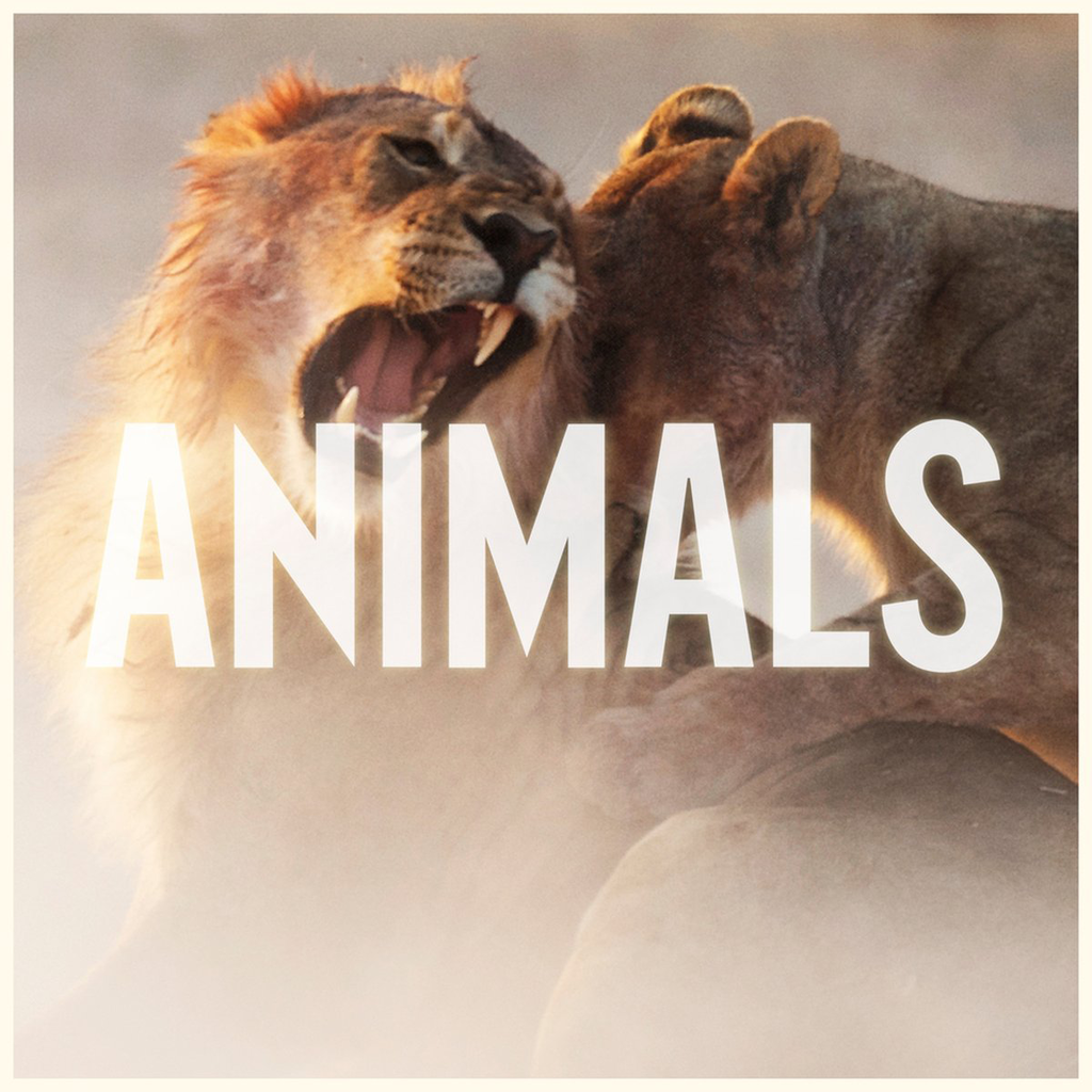 Maroon-5-Animals-2014-1200x1200
