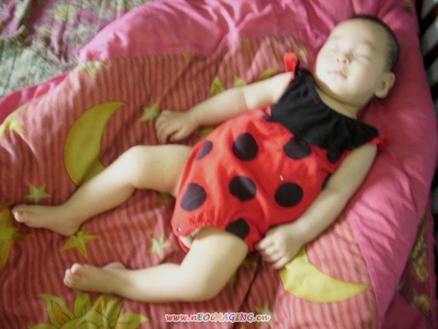 我是小瓢蟲.不是草莓