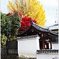 宇治--銀杏與楓.jpg