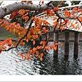 宇治--橘橋~.jpg