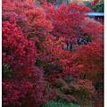 東福寺-居高臨下-1.jpg