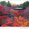 東福寺-紅葉與通天橋-1.jpg