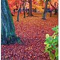 東福寺-庭院楓葉地毯-1.jpg