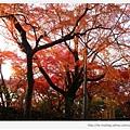 東福寺-楓樹-1.JPG