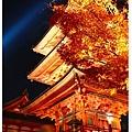 清水寺-三重塔的夜楓.jpg