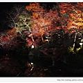 清水寺-夜楓的水池倒影.JPG