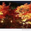 清水寺-美麗的夜楓.jpg