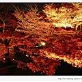 清水寺-層層疊疊的夜楓.jpg