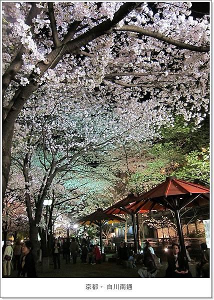 白川南通-夜櫻花叢1