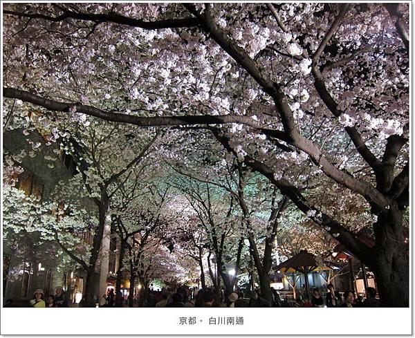 白川南通-夜櫻花叢