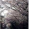 木屋町-櫻花道