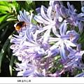 沐心泉-愛情花裡的蜜蜂