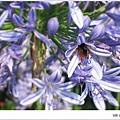 沐心泉-蜜蜂在花裡