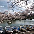 貴志川線-大池遊園小船與櫻