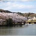 貴志川線-大池遊園池邊櫻花