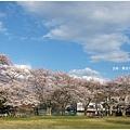 貴志川線-大池遊園綠地櫻花