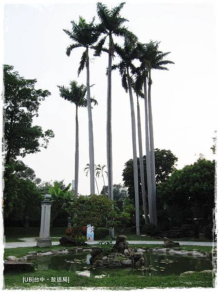 放送局-庭院大王椰子