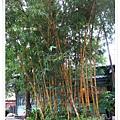 竹東-林業展示館-黃竹