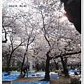 韌公園-櫻花藍地