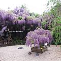 泉南藤花-日式庭院