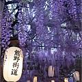 泉南藤花-紫藤花棚架